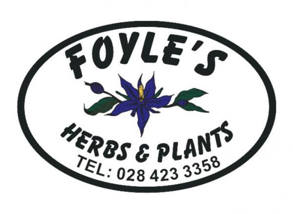 Foyle's Nursery